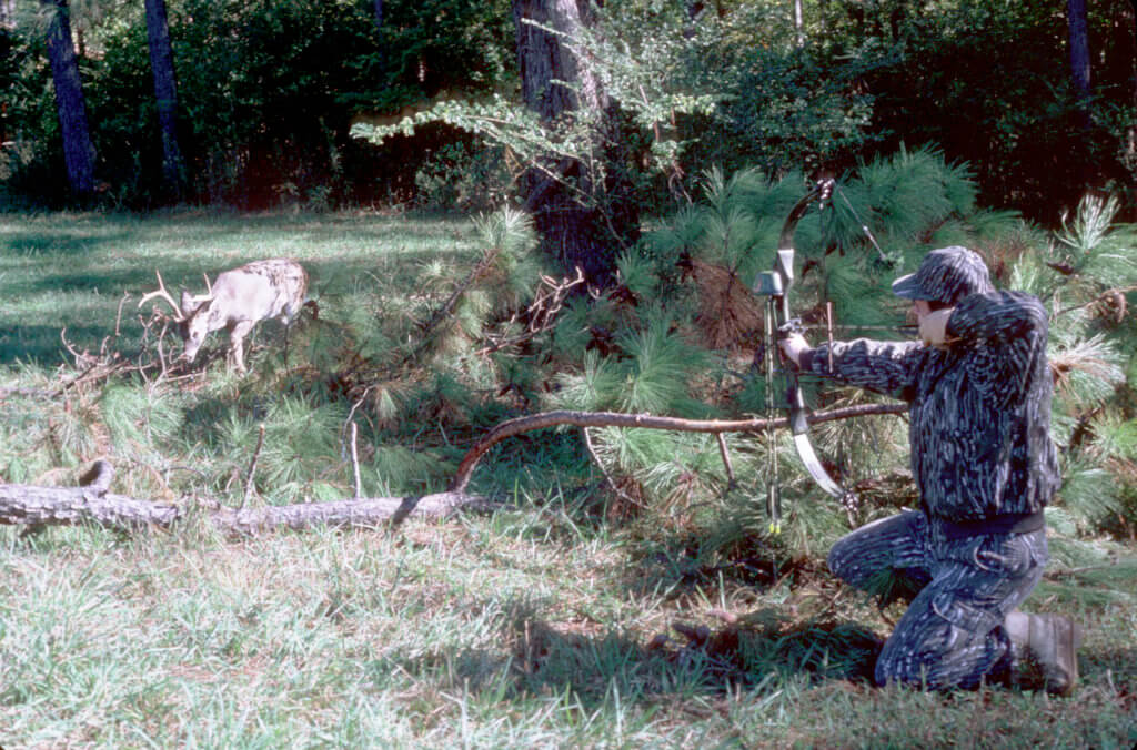 Bowhunter aiming at a whitetail buck from the ground.